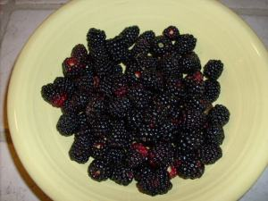 Just a little sampling of dewberries